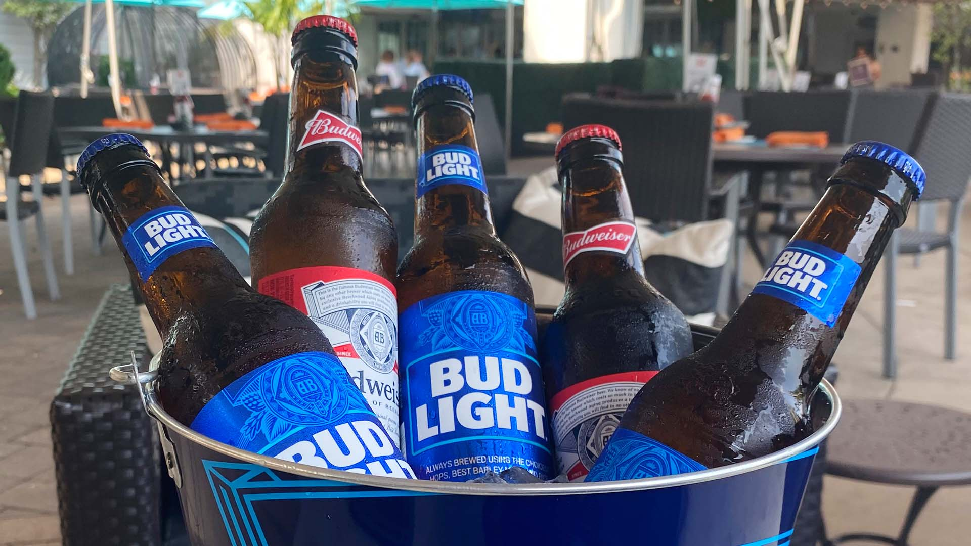 Bud and Bud Lt Beer Bottles in a Bucket Special